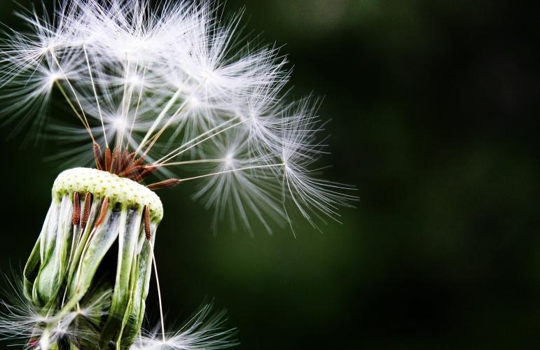 Alergija in anafilaksija